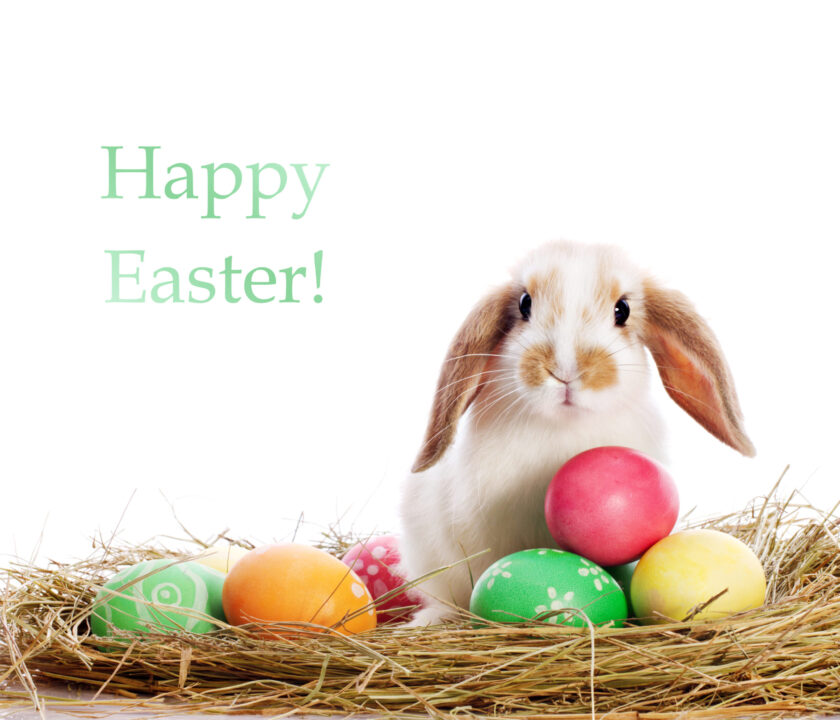 A Cute rabbit and eggs Easter eCard
