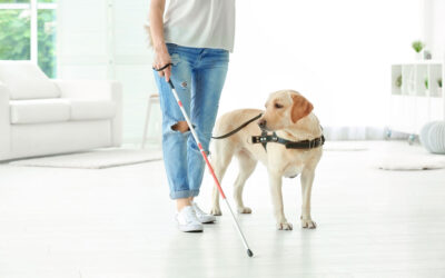 World Blindness Awareness Month: Celebrating the Important Role of the Guide Dog